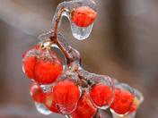 Freezing rain today