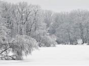 Icy Clark Pond