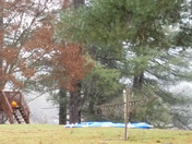 Snowing in Placerville - -