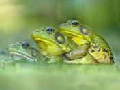 2a. Froggie friends