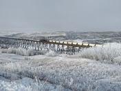 Hoar frost delight