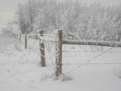 Winter hoar frost