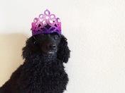 Ebony's 4th Birthday