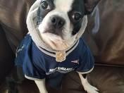 Meet Bill Pup-ichick!