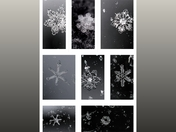 Variety of Snowflakes