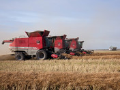 Three Combines Strong