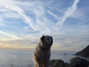 Jazz enjoys Big Sur
