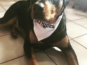 Patriots pup