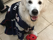 Nash Bean is ready for the super bowl! Go Pats!!