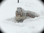 WINTER SQUIRREL!