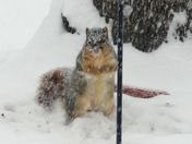 MR SNOWY SQUIRREL!