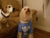 I just thought this was so adorable and as you can tell we are huge tarheels fans