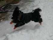 Piccolo love  the snow