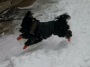 Piccolo love  the snow