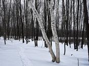 Snowshoeing...