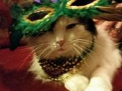 Clyde celebrating Mardi Gras