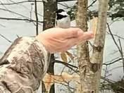 Feeding my birds .