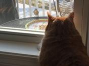 Vinnie is keeping an eye on the bluebirds!