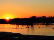 Swans on Rapp Lake