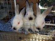Bun bunnies