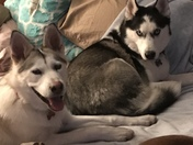 Bella and Balto