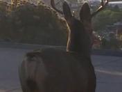 Buck on a steep driveway