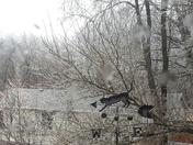 Ice storm, 2/20/18