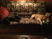 Love our dogs