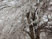 Ice in Bethel Acres