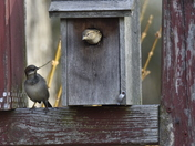 The Birds Love It, Too!