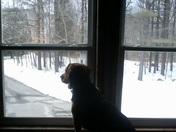 Ike the Beagle