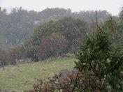 Snow Falling in El Dorado