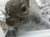 Squirrel peaking in the window next to my front door