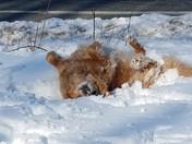 Teddy having fun