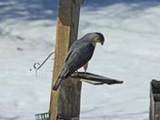 bird feeder ?