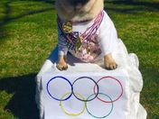 Pumpkin goes for Olympic gold!