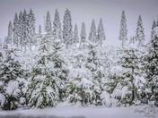 Camino Snow