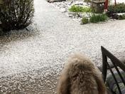 Hail in Galt