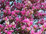 Taken today, Spring?