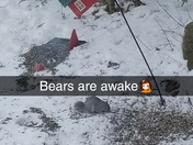 Bears are awake🤦