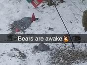 Bears are awake🤦