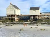 Low Tide Love at Willard Beach