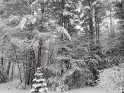 Snowing in Langdon