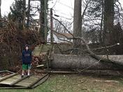 Fallen tree hit house