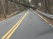 3 trees down on Hillside Rd