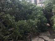 Winder storm