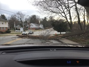 Tree Down on Rogers by Wabash