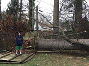 Trees down