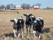 Sunny Day on the Farm - Photo by Dave Austin