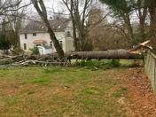 Huge 100ft Tree Down